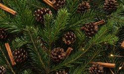 Pine fronds with cones and cinnamon sticks